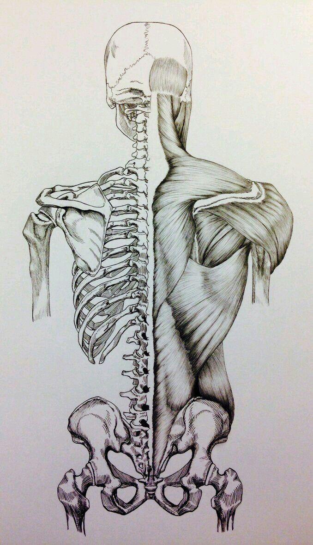 Pin De Ekaterina Kuzmina Em Chelovek Skelet Telo Myshcy