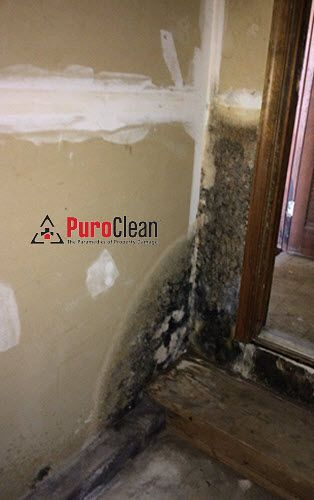 Garage Mold Growth From Laundry Room Leak