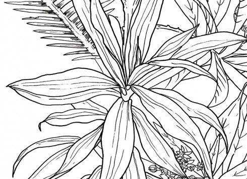 Papier Peint Jungle Tropical Noir Et Blanc Format Lé Unique