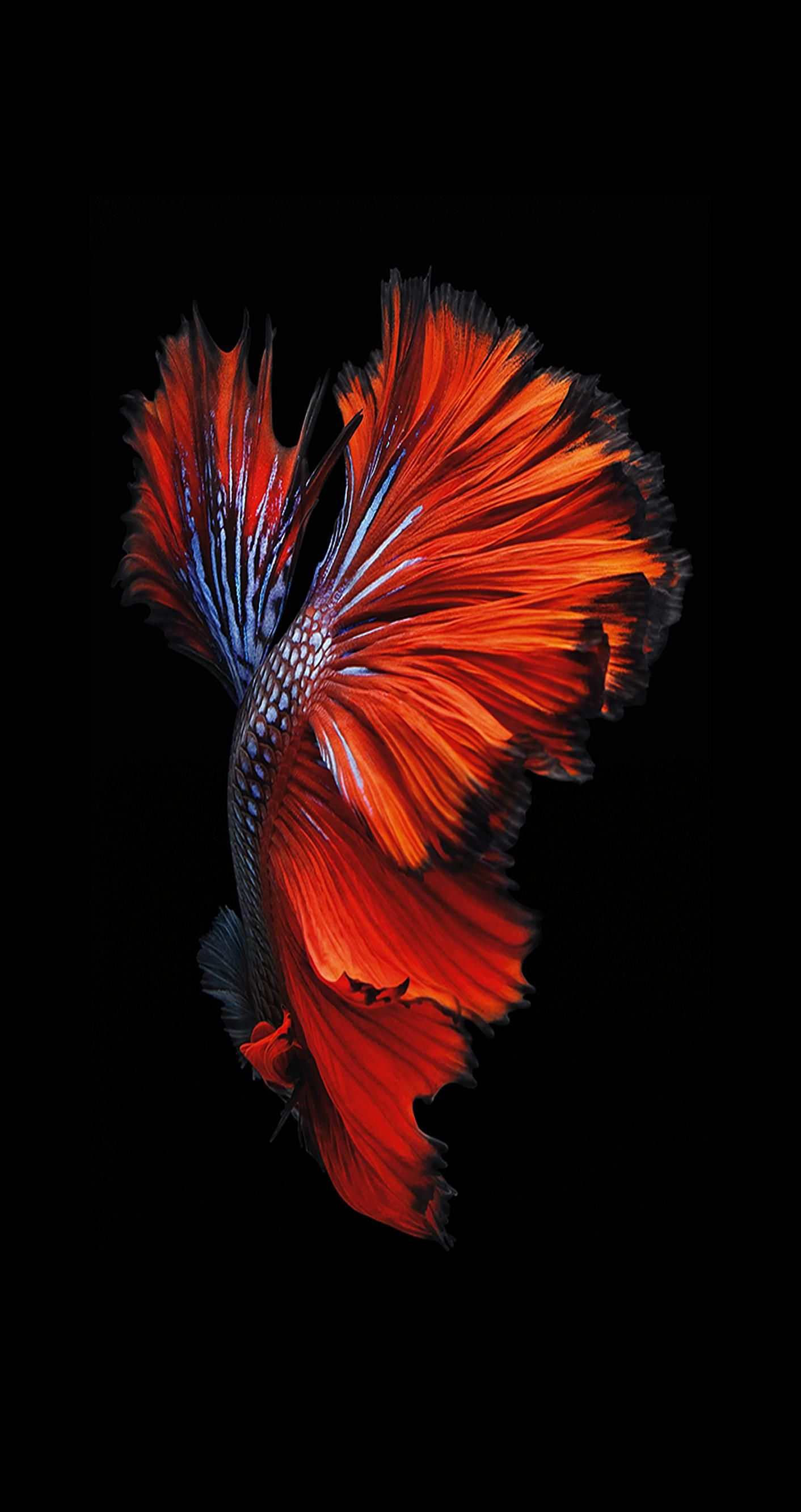 Animated Wallpaper n.4 from iPhone 6s and iOS 9 | iSpazio.net | All Wallpapers | Pinterest ...
