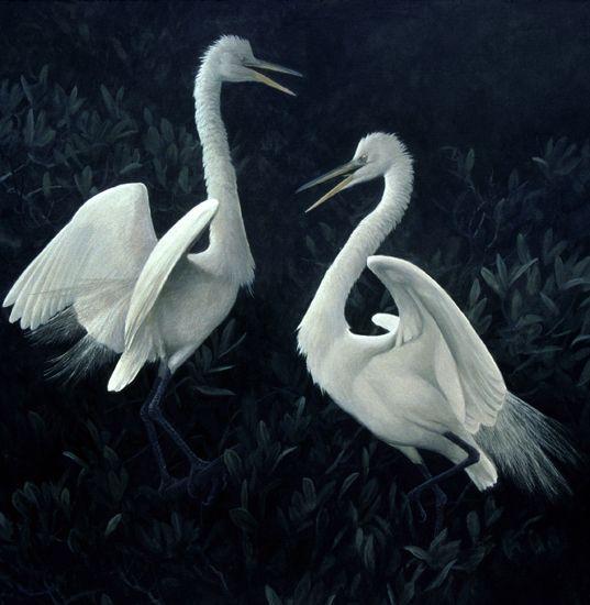 Great Egrets Fighting by Robert Bateman