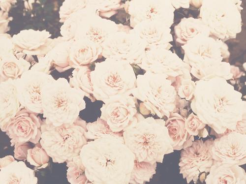 flower background tumblr google search stuff to buy pinterest