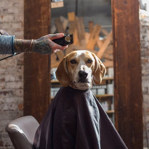 ♂ It's a man's world Maddie's first haircut