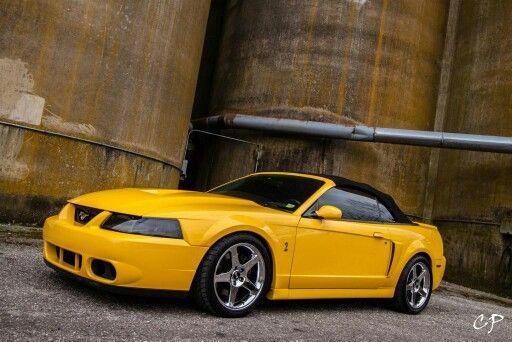 Mustang Cobra Terminator Yellow