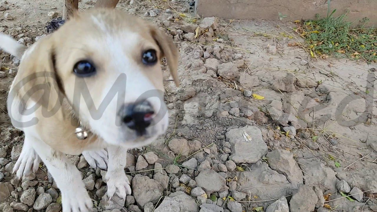Puppy Rescued During A Rainstorm By Some Kind Folks Puppies Rescue Animals