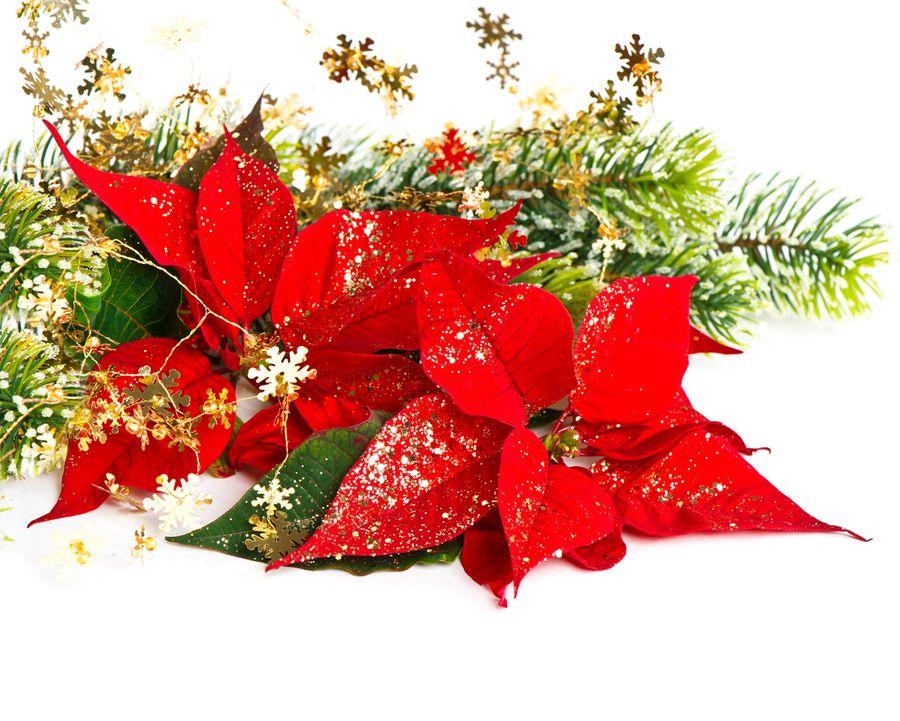 Открытки новогодние цветы, открытки телефон