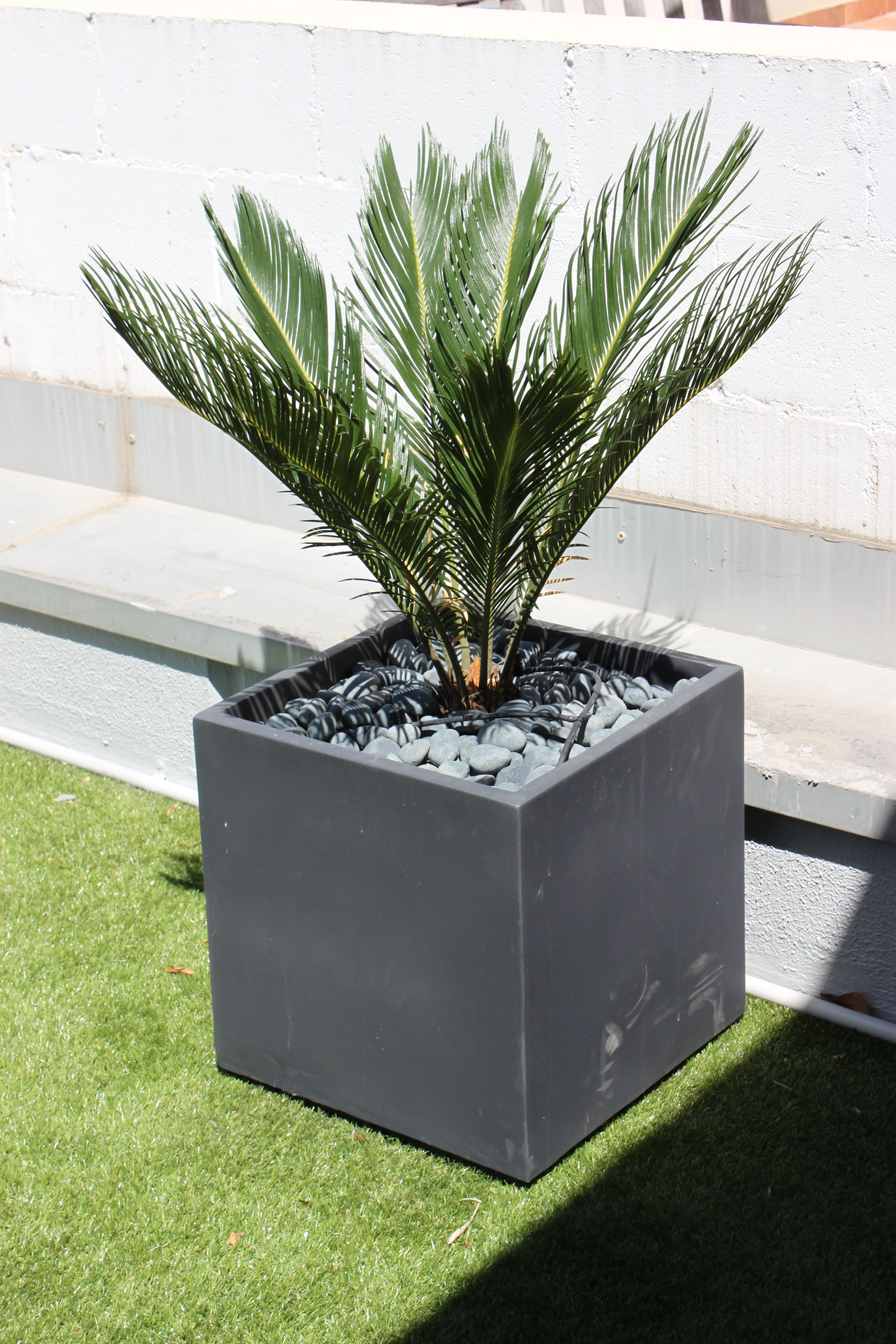 nadia gill landscape architect - charcoal cube planter with cycad