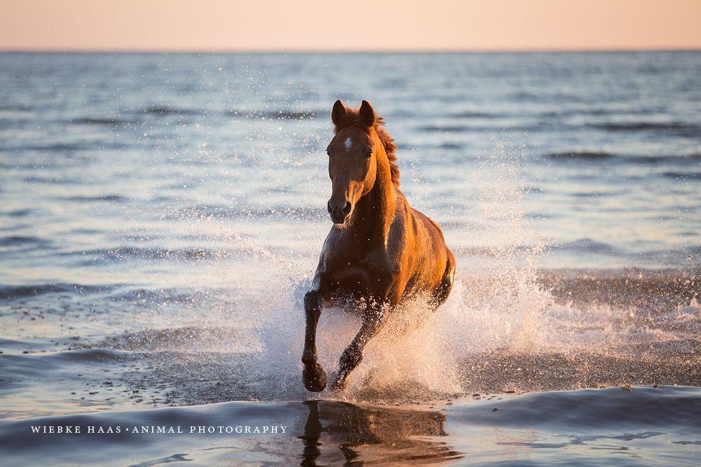 sammelshooting in mecklenburg  pferde fotografie