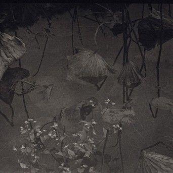 Takeshi Shikama, Evanescence--Lotus #20, 2004
