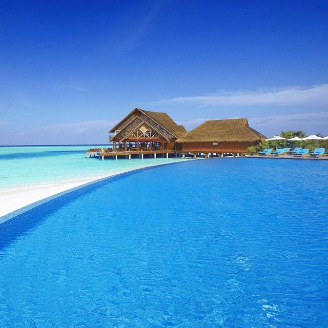 1 South Male Atoll Ilhas Maldivas Amazing Swimming Pools Beach Scenery Vacation Villas Beautiful swimming pool eagle wallpaper