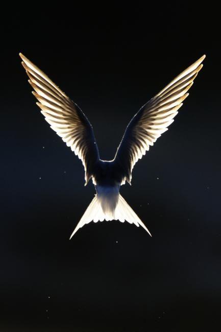 Like An Angel Finland By Jari Heikkinen Dazzling