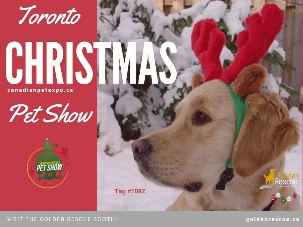 Golden Rescue Will Be At The Toronto Christmas Pet Show Today From