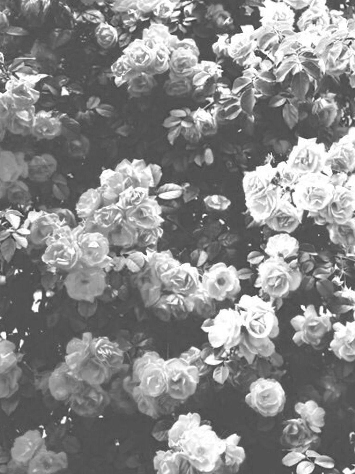 Black and white flower wallpaper ハッピーバースデー 画像, 花 背景, バースデー画像
