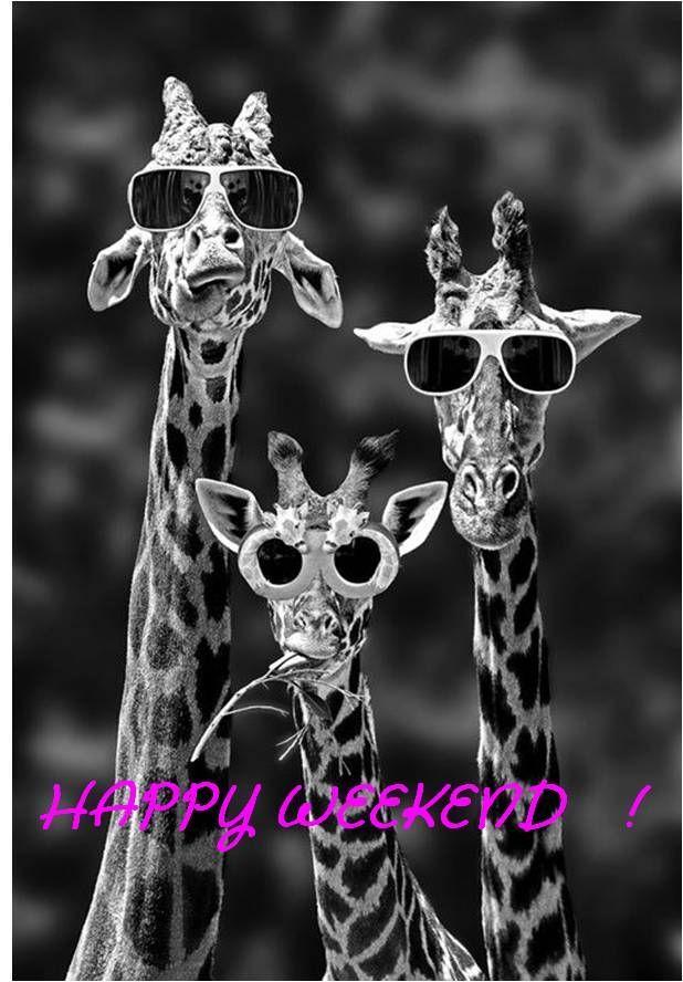 Llegamos al final de la semana... Estamos ya a viernes y con muchos planes por delante !!! A disfrutar del finde chicas !!!  http://ohlalabijoux.com