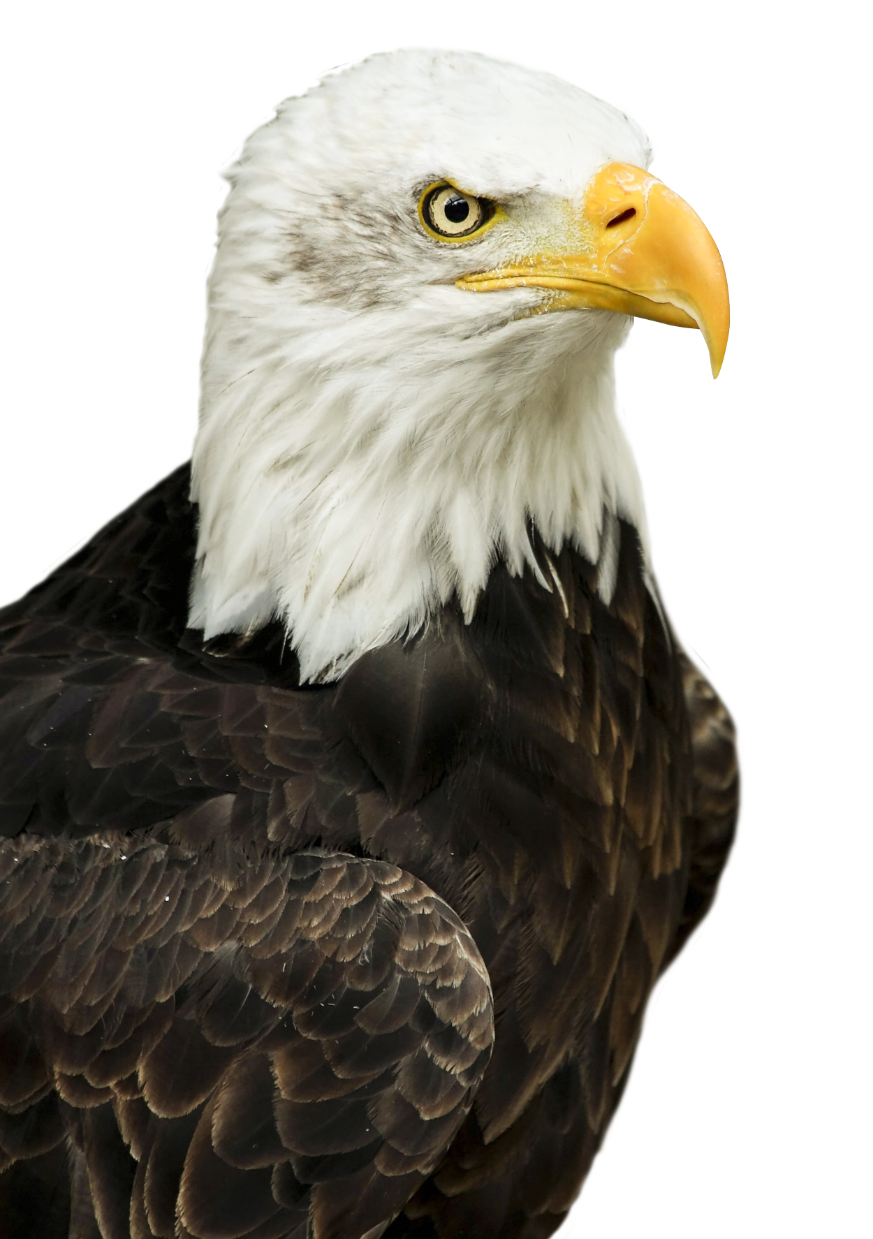Eagle Png Image Clip Art Borders Cartoon Clip Art Cute Clipart