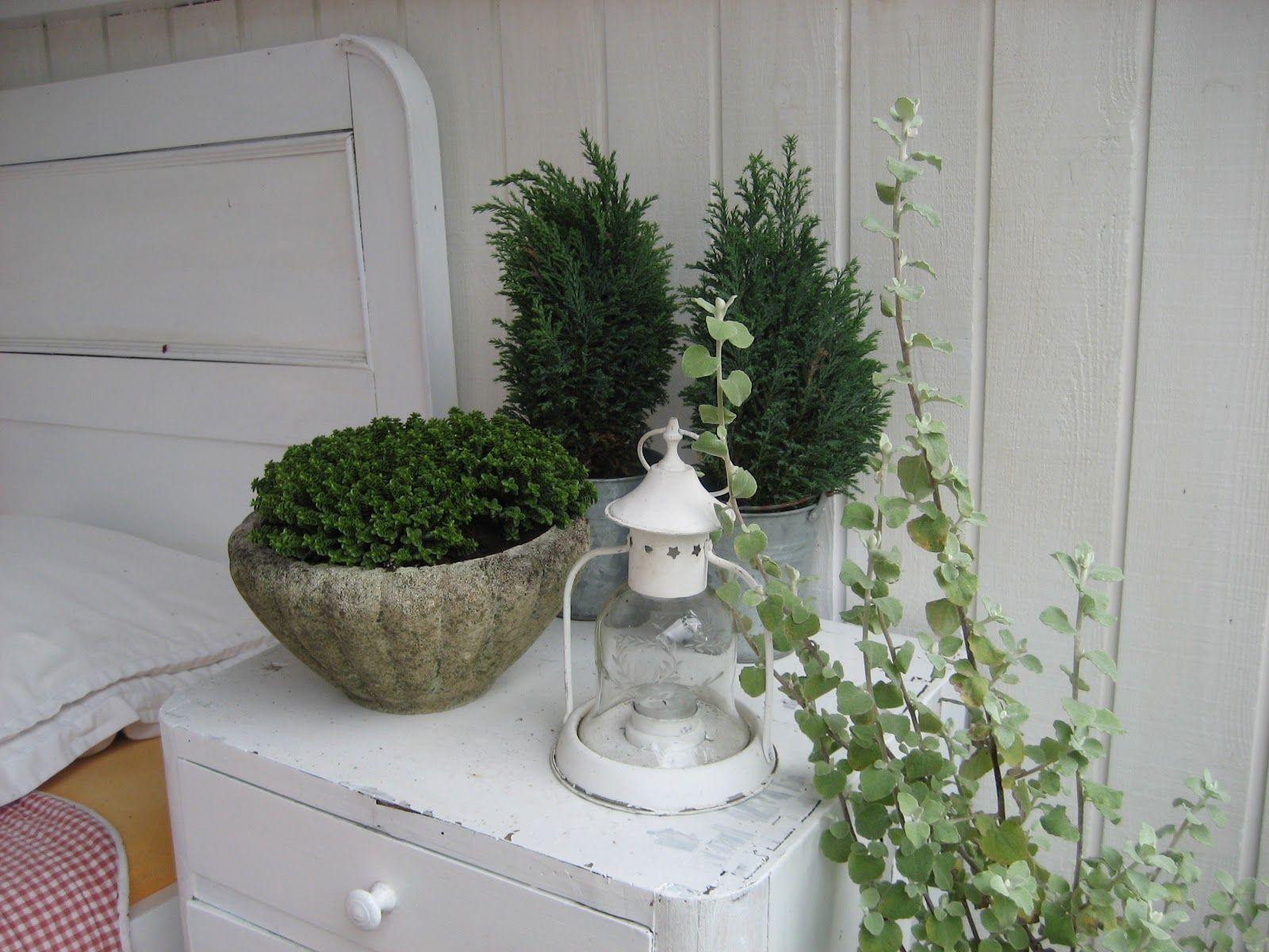 Mrs. Pedersen's garden: October 2012
