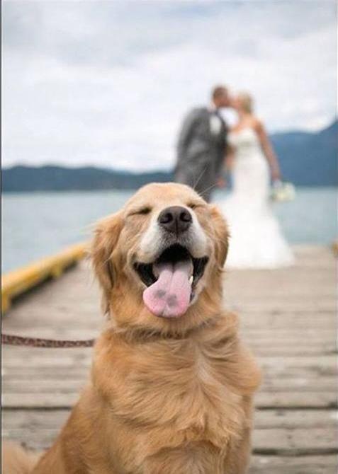 Photobomb Level Golden Dog Wedding Dogs Wedding Pictures