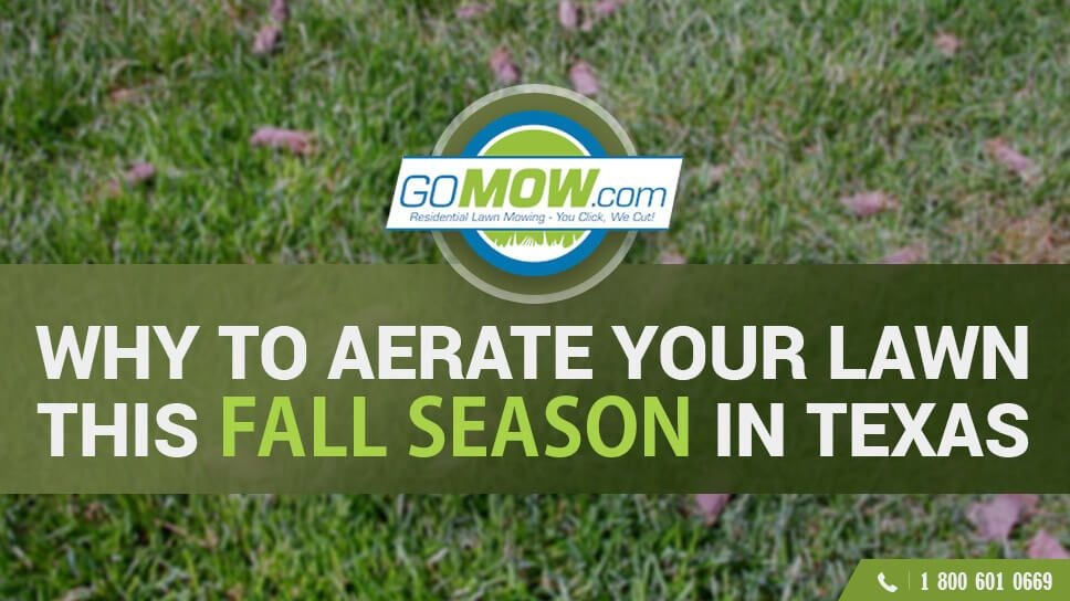 Why Aerate Your Lawn This Fall Season In Texas Lawn Fall Lawn