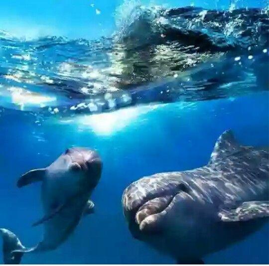 Delfiinejä .