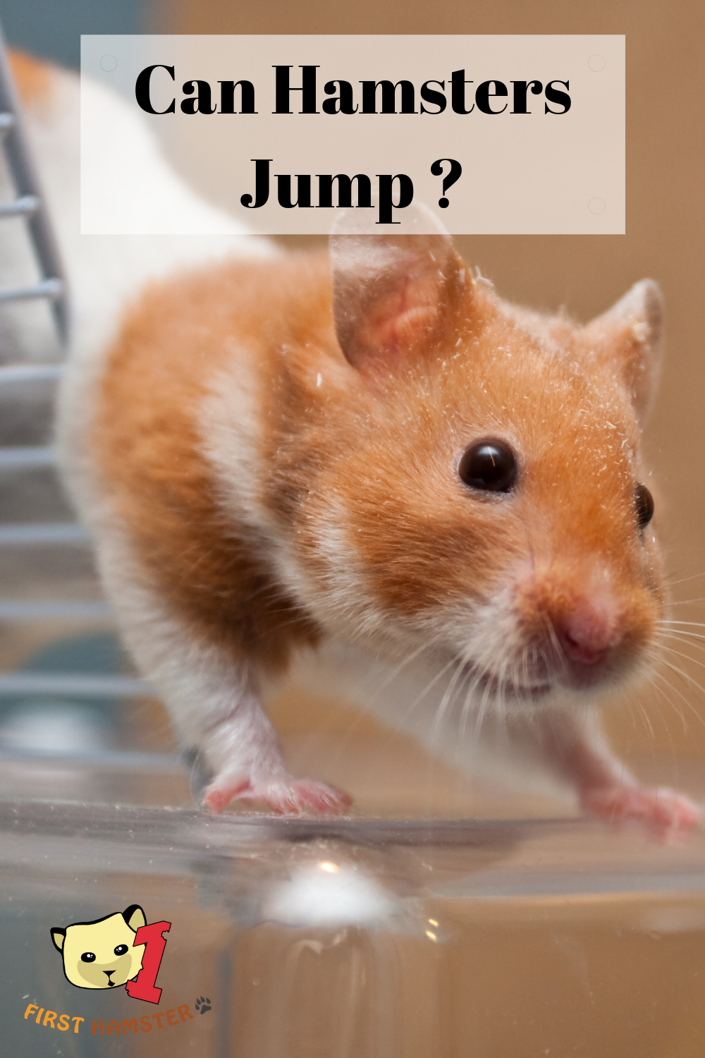 Can Hamsters Jump Hamster Hamster Care I Need To Know