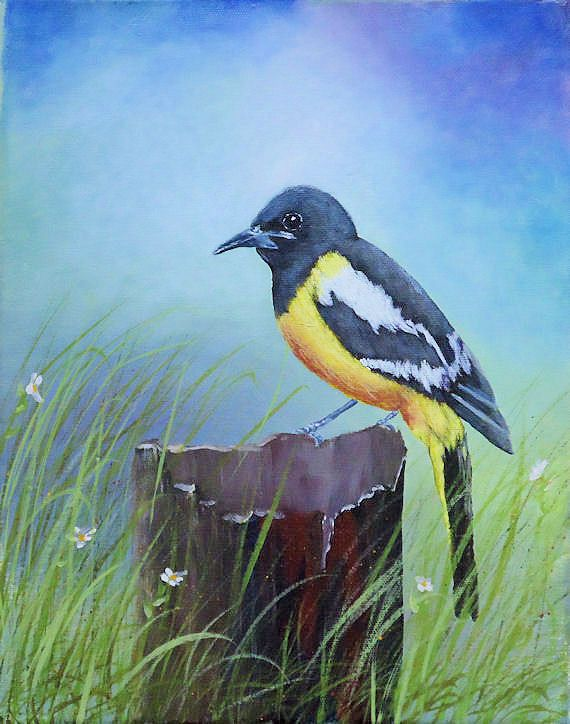 Fine art acrylic painting: An Arizona native bird, a Scott ...