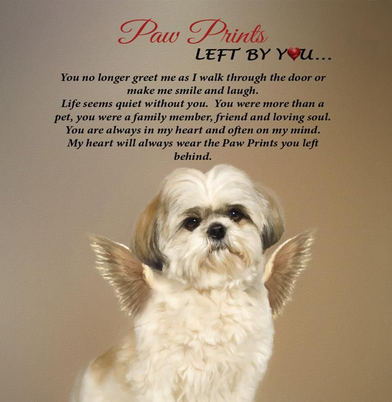 Shihtzu Angel Paw Print 12 X 12 Plaque Paw Prints Left By You