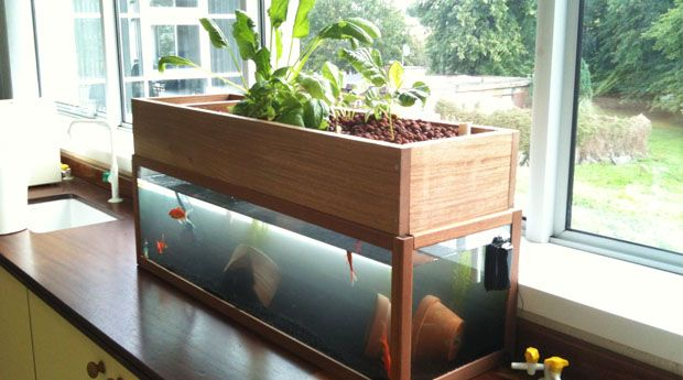 Crucial home aquaponics system how to diy guide http vur for Fish tank hydroponic system