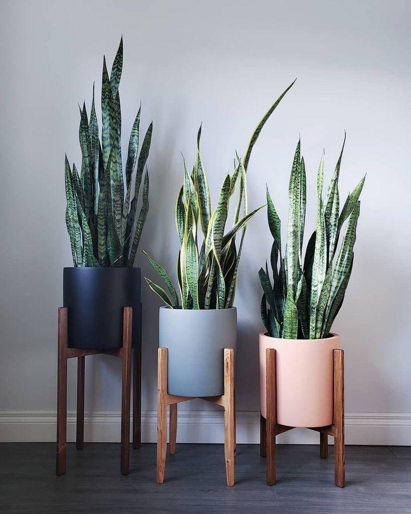 26 Gorgeous Interior Design With Indoor Plants Plant Decor Indoor House Plants Decor Plant Decor