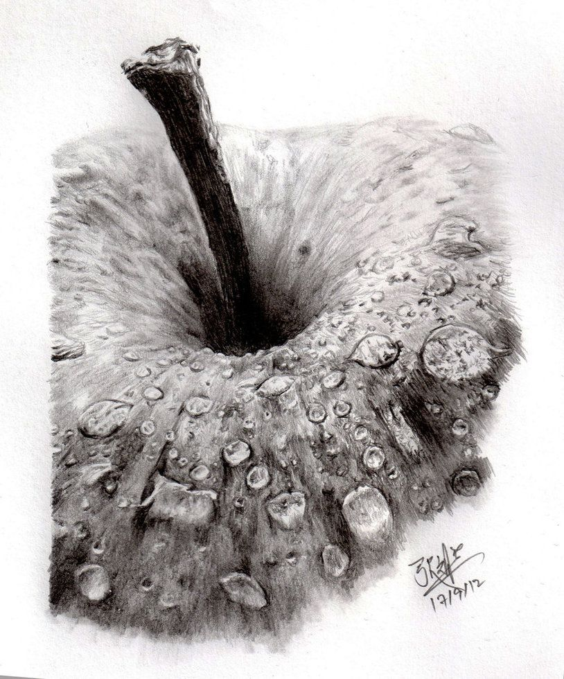 Pencil sketch of an apple by chaseroflight on deviantart