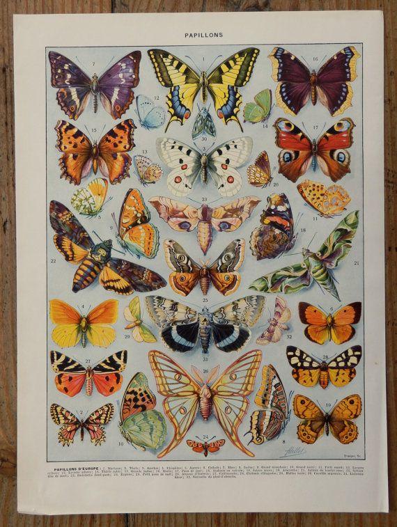 Vintage Print 1920 S Exotic Butterflies Beautiful Print 90 Years Old