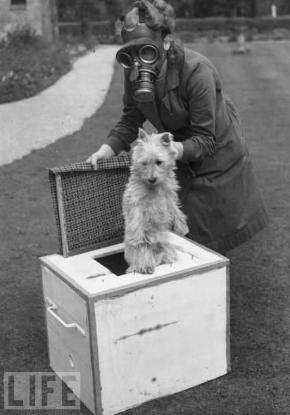 A British shelter worker protects a dog in 1941. The National Canine Defence League not only protected dogs, it also used dog-hair combings to knit into clothing for the troops.