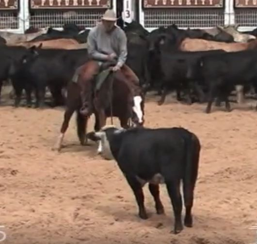 STATE OF PLAY - 2010 Sorrel mare in training with Chris Hanson, originally trained and shown by Chad Bushaw.    Sire: Widows Freckles  Dam: Coffee Cat (By High Brow Cat)    Currently being shown in the Non Pro Aged Events and weekends by owner. Last earned a check in Nov. 2015  NCHA LTE: $9,280 Novice eligible and will make an excellent Non Pro / Amateur prospect.      For more info contact;        Kevin Maxwell PH: 817-542-9881 (owner)      or       Chris Hanson PH: 940-923-3458 (trainer)…