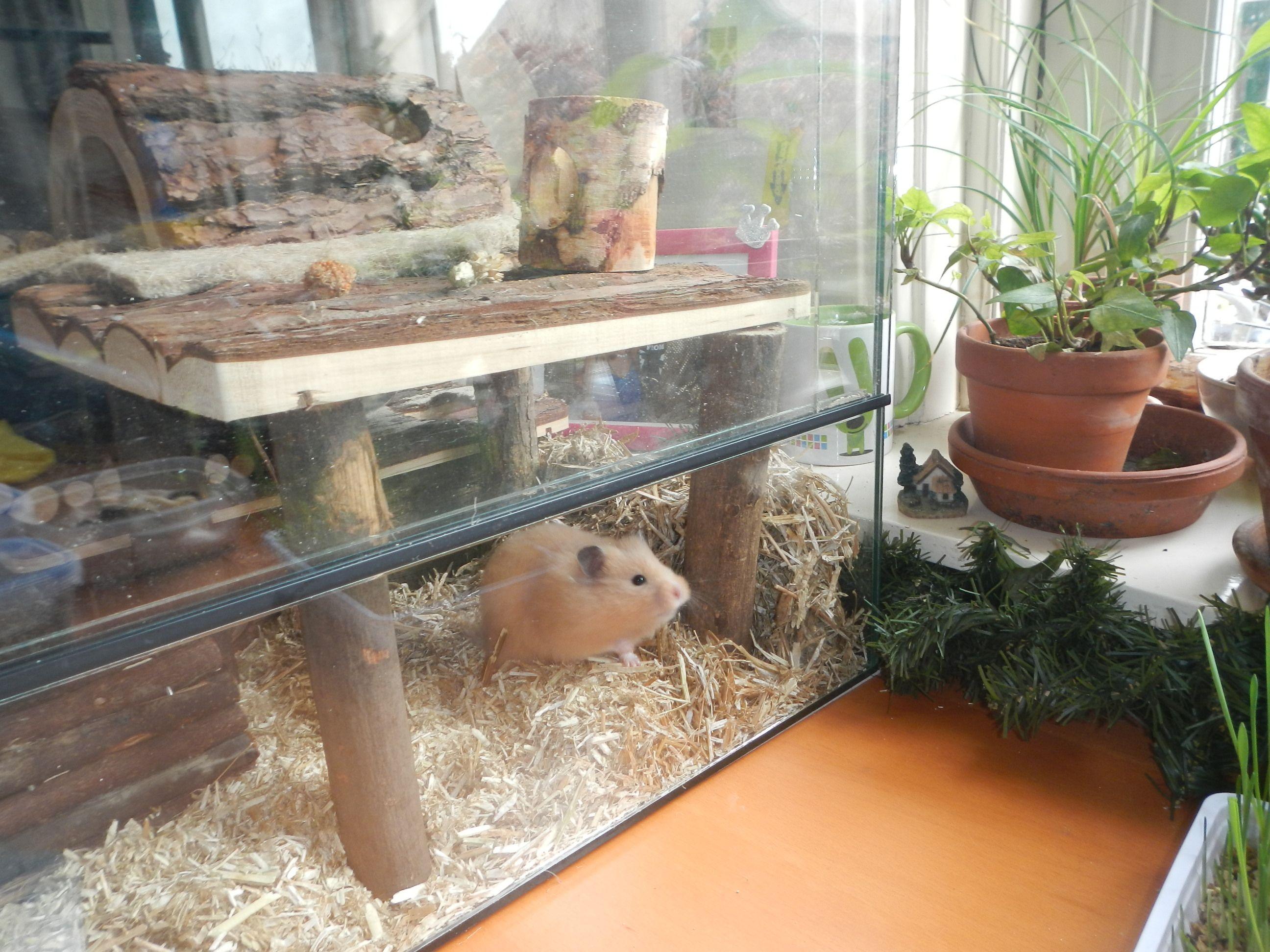 Hamster Natural Hamster Cage Terra Hamster Cage Hamster Habitat