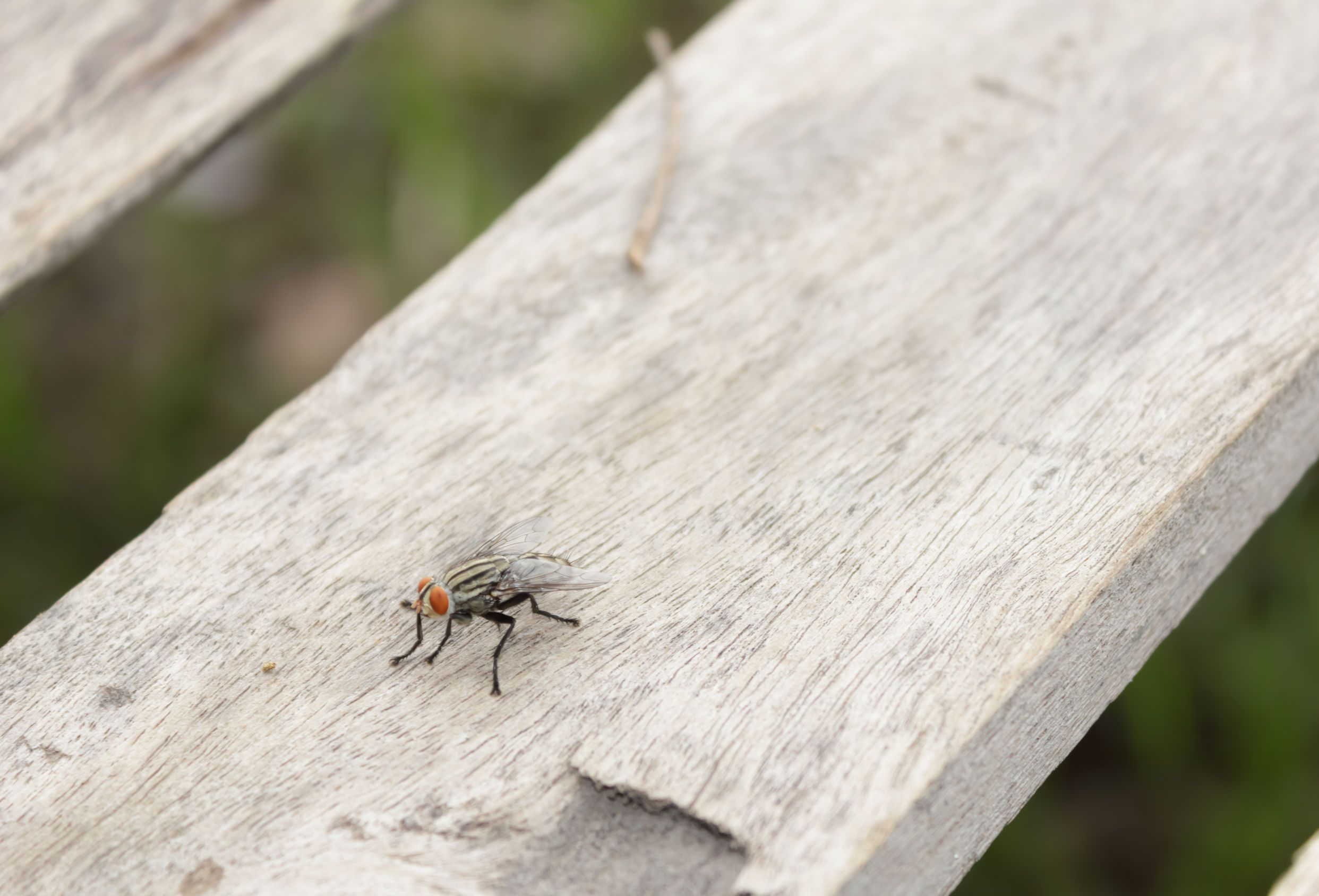 Everything You Need to Know About Fly Behavior Terminix