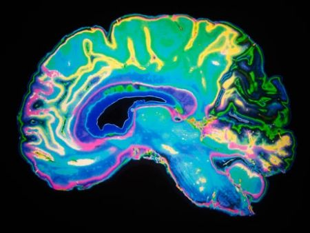 Browse a list of articles, videos, and other links for exploring the connection between education and neuroscience.