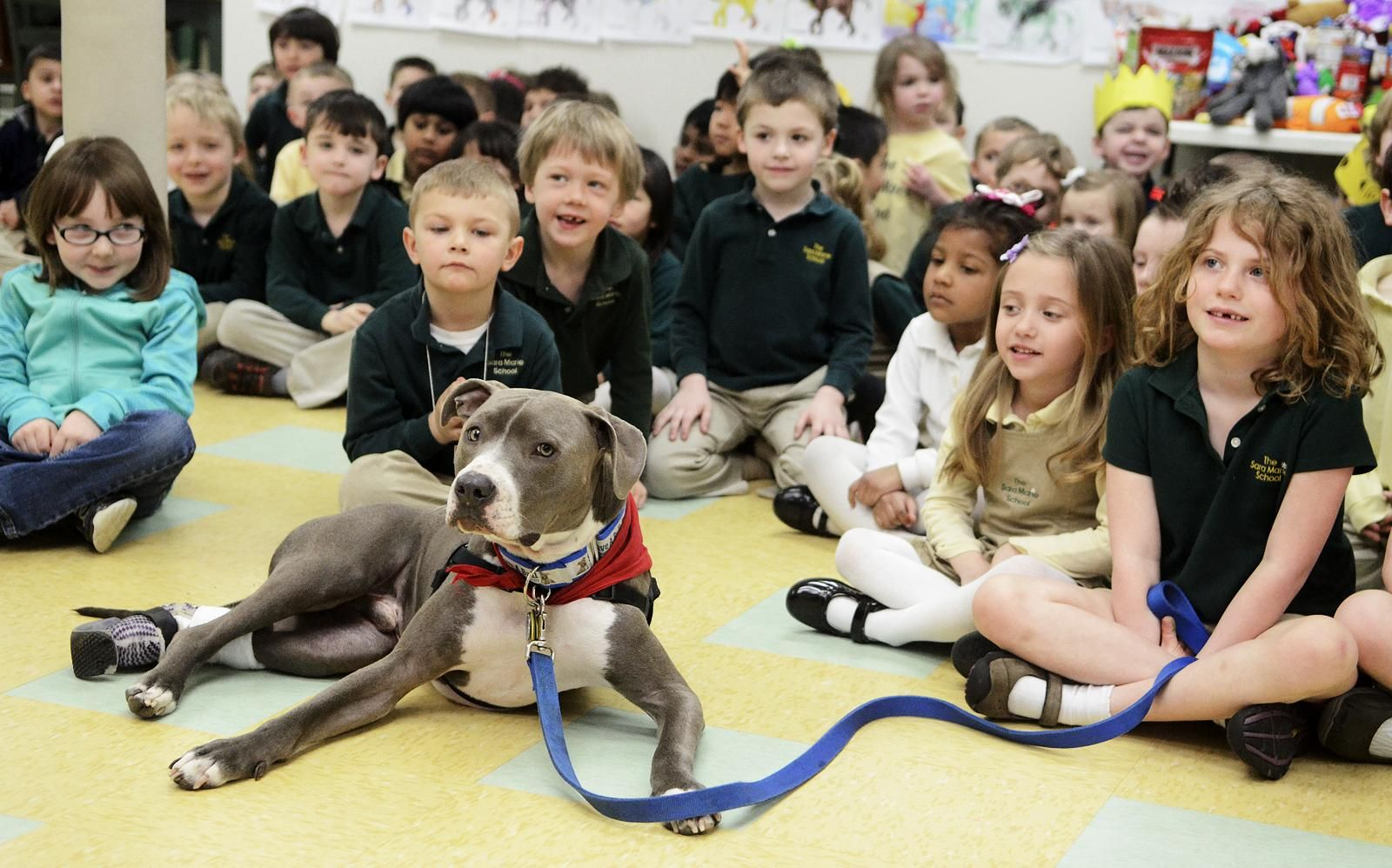 Therapy dog teaches young students about perseverance news certified therapy dog hudson listens as his owner rich nash not in photo talks about the dogs prosthetic paw during their april 10 visit 1betcityfo Image collections