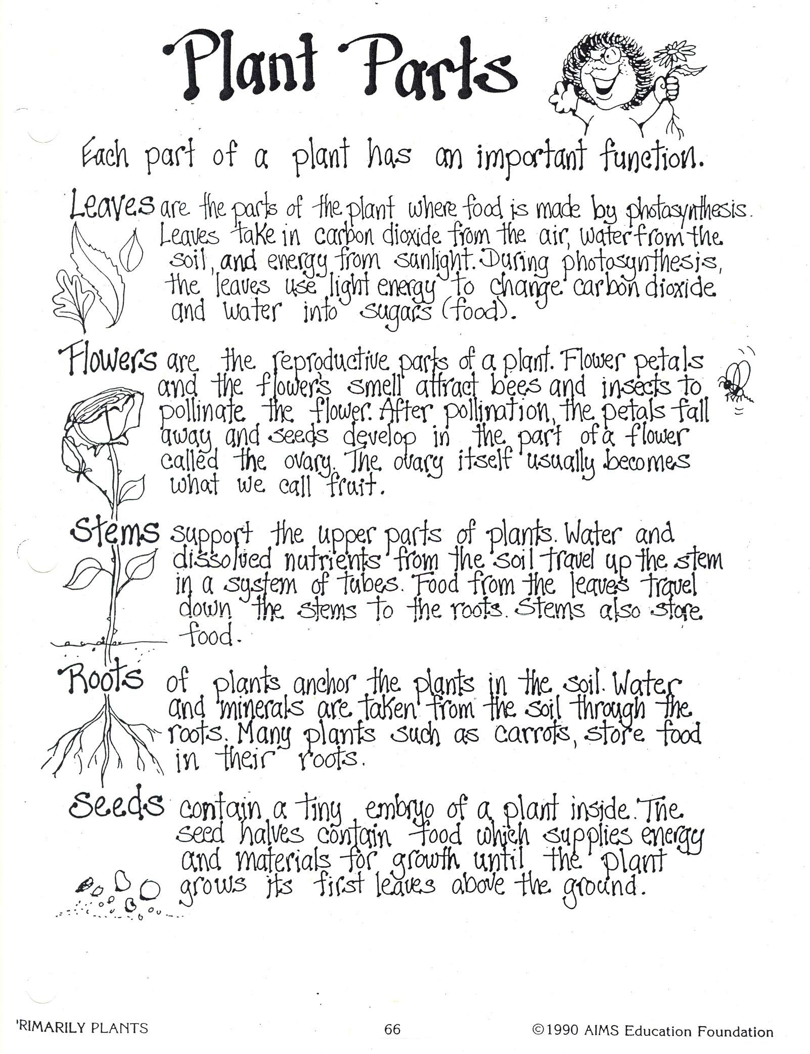 worksheet Plants Worksheet 3rd grade science plants worksheets google search summer brain pinterest 2 and science
