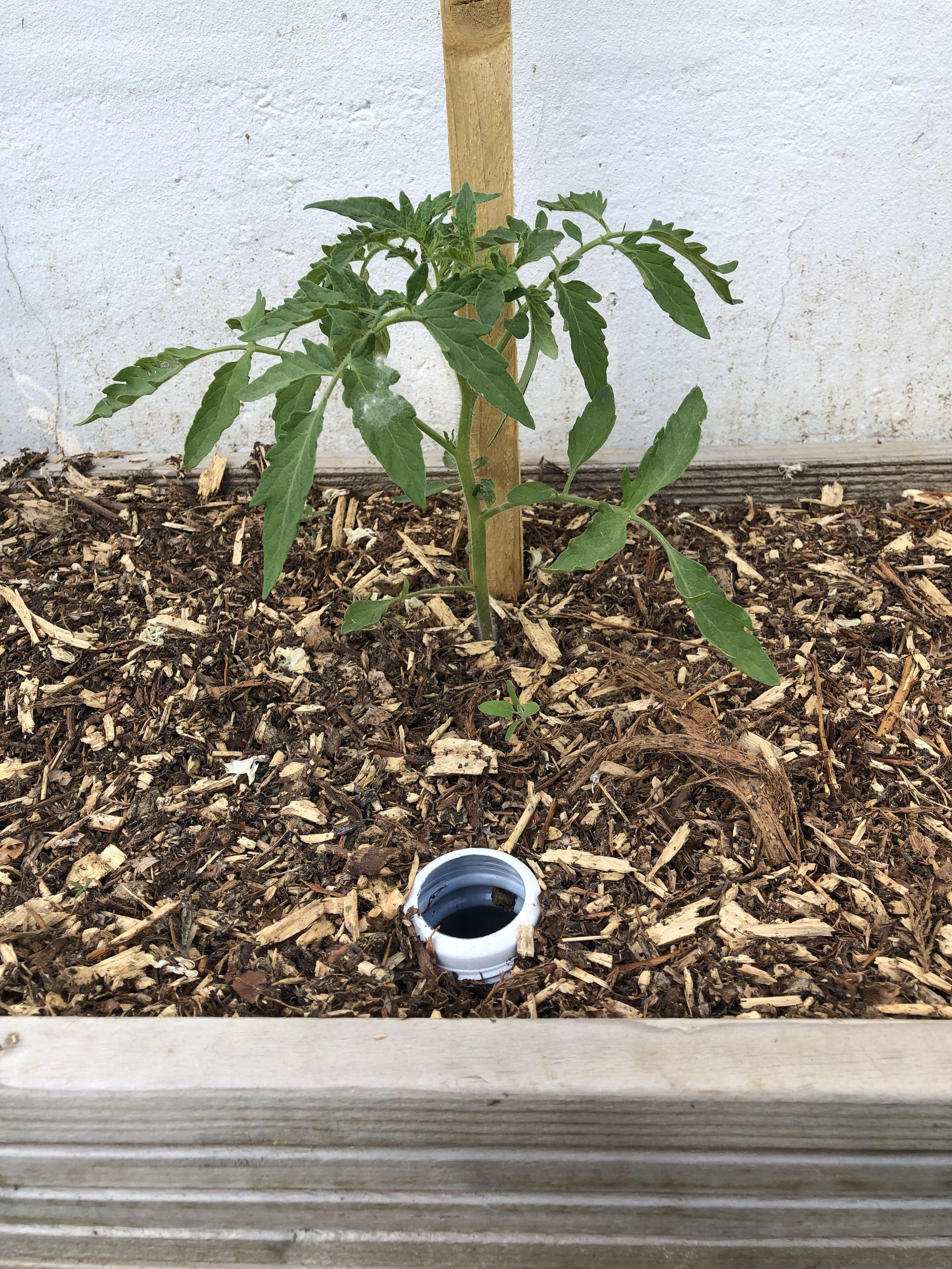 Épinglé sur Tomates. Planter des Tomates