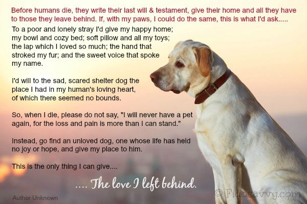 Heart Wrenching Poem From An Old Dog To His Owner What Your Would Ask You When He Crosses Over The Rainbow Bridge