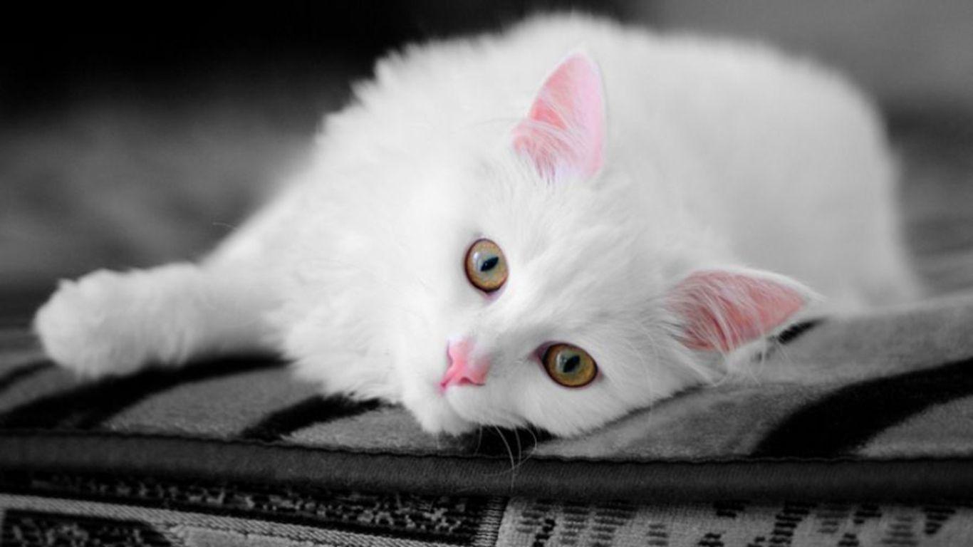 Cute Neko p to see more Neko Atsume the cat wallpapers