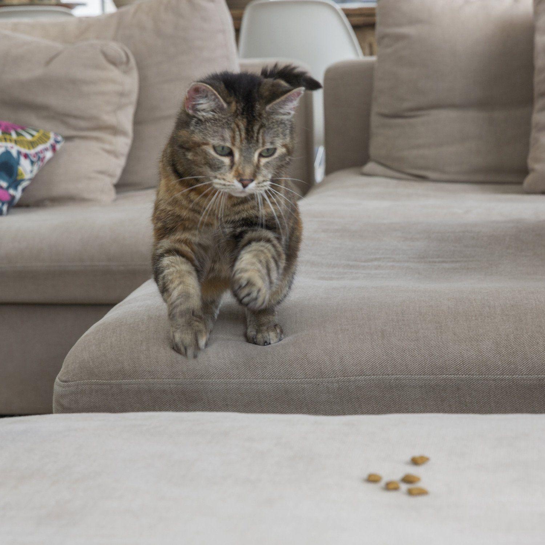 TEMPTATIONS Classic Treats for Cats Blissful Catnip Flavor