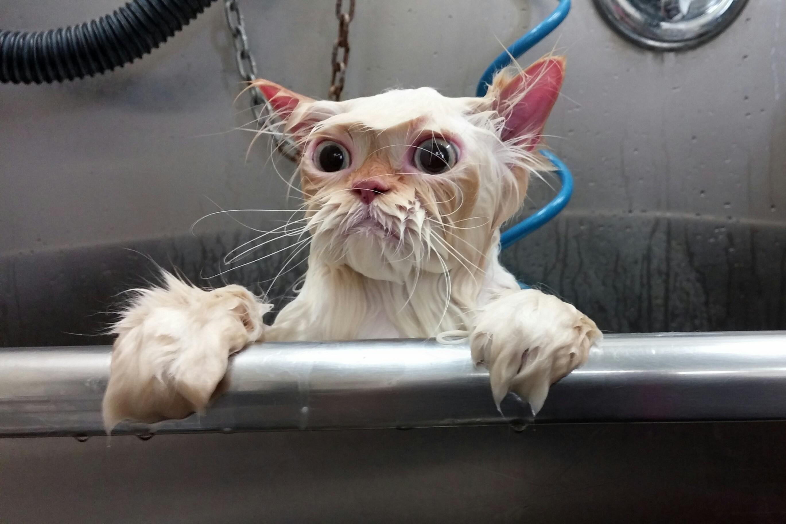 Psbattle Wet Cat Peeking Out Of The Bathroom