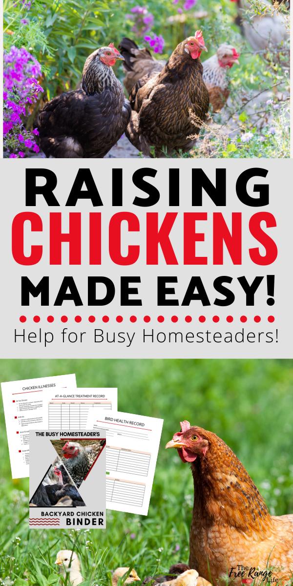The Busy Homesteader's Backyard Chicken Binder   The Free ...