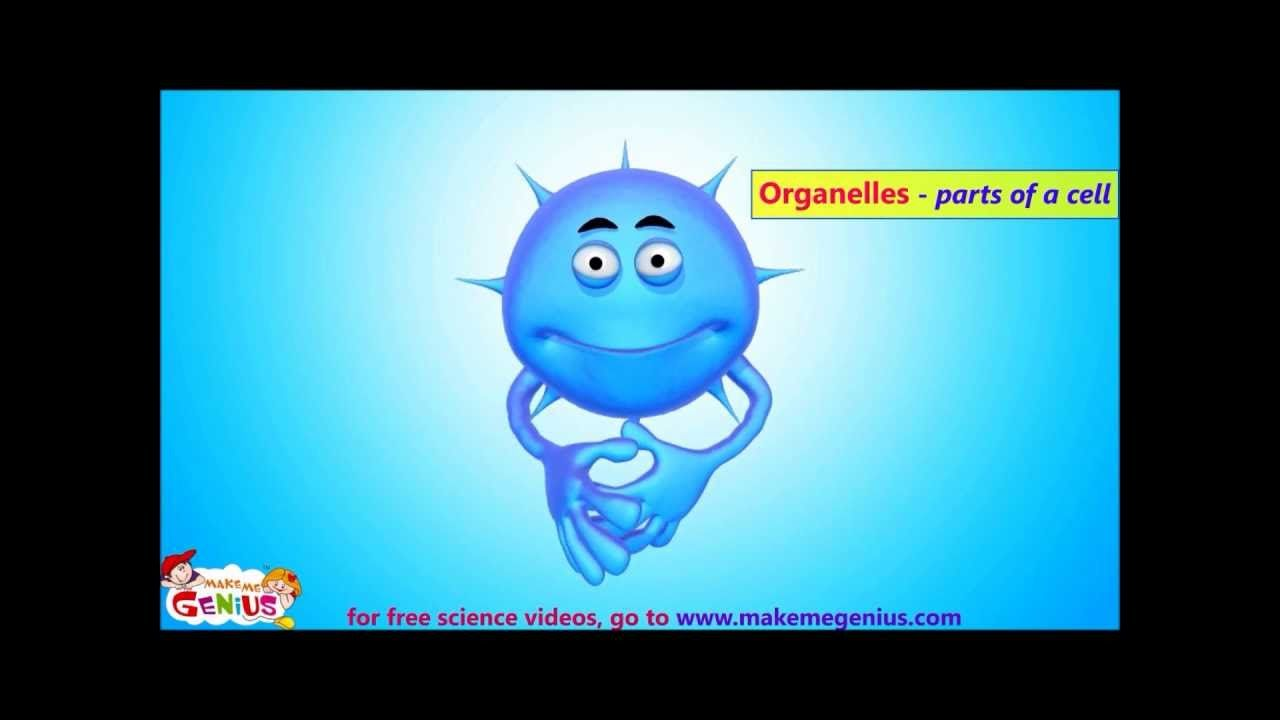 Animals cells structure functions animation video simple cells body systems fandeluxe Choice Image