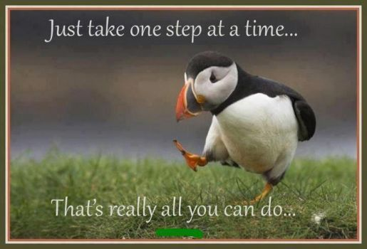 one step at a time (24 pieces) | Unpopular opinion puffin ...