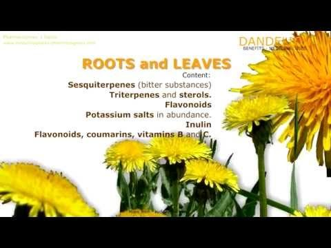 Http Www Medicinalplants Pharmacognosy Com Herbs Medicinal Plants Dandelion Dandelion Plant Scientific Name Identificat Dandelion Benefits Herbs Herbalism