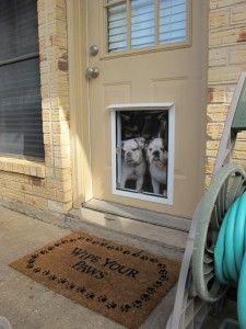 Pet Independence Installs A Hale Pet Door In The Door In Austin Tx