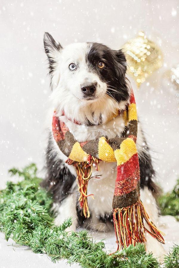 Spotlight Pawsh Magazine Holiday Dogs Daily Dog Tag Dog Holiday Pet Holiday Dog Magazine