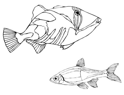 fish printable pyrography stencils download educational - Printable Drawing Stencils