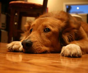 fixing doggie damaged floors | how to remove scratches from